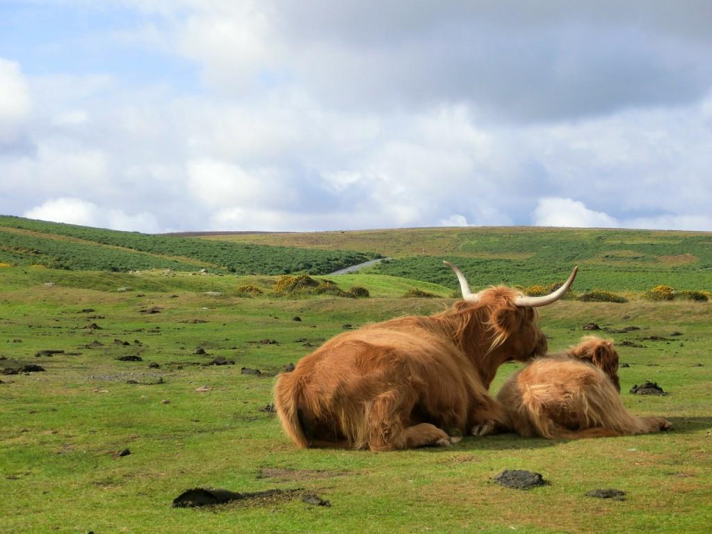 dartmoor-200585_1280
