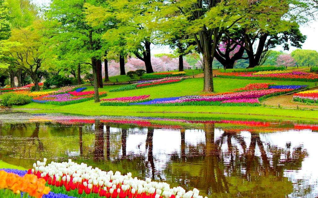 garden-1093681