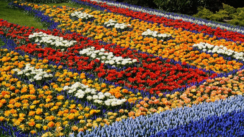 a-colorful-flower-bed-2079769_1920